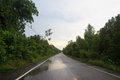 Wet Black Road With Tree Fores...