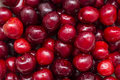 Wet Cherries Royalty Free Stock Photos
