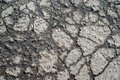 Wet cracked asphalt surface Royalty Free Stock Image