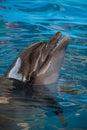 Wet dolphin Stock Photos