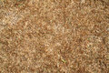 Wet dry turf surface of in the moring Royalty Free Stock Photography