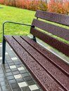 Wet empty wooden bench with rain drops in Royalty Free Stock Photo