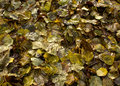 Wet fallen leaves seasonal background Stock Images