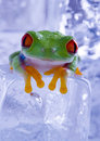 Wet frog Royalty Free Stock Image