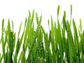 Wet grass. Royalty Free Stock Images