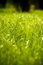 Photo : wet grass cold summer hold