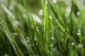 Wet Grass Close-up Stock Photography