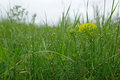 Wet grass under the rain Royalty Free Stock Photos