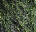 Wet green algae Royalty Free Stock Images
