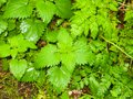 Wet green foliage leaves on the ground rain forest Royalty Free Stock Photo