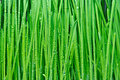 Wet green grass Royalty Free Stock Photo