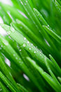 Wet green grass Stock Images