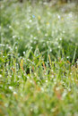 Wet green grass bokeh dew drops Stock Photography