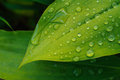 Wet leaf close up with dew drops Stock Photography