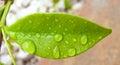 Wet leaf little on a garden Royalty Free Stock Photos