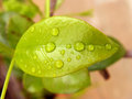 Wet leaf little on a garden Royalty Free Stock Images