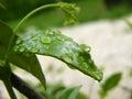 Wet leaf little on a garden Stock Photos
