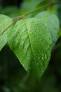 Wet leaf macro shot after a rainstorm with a lens Royalty Free Stock Photography