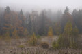 Wet and misty morning in october abramtsevo russia Royalty Free Stock Image