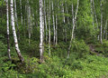 Wet mixed forest on the hillside sinyuha altai krai Royalty Free Stock Images