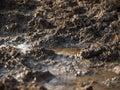 Picture : Wet mud rocks  bath