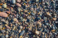 Wet pebbles on beach Royalty Free Stock Photo