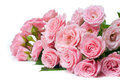 Wet pink roses on a white background Stock Photo