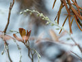 Wet plant branches in winter forest with water drops and blurred background Royalty Free Stock Photography