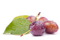 Wet plums Royalty Free Stock Photos