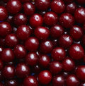 Wet ripe cherries as background Royalty Free Stock Photo