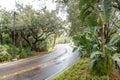 Wet Road Curving Through Tropics Royalty Free Stock Photo