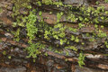 Wet rock face with plants Royalty Free Stock Photo