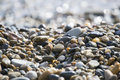 Wet sea pebbles Royalty Free Stock Photo