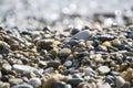 Wet sea pebbles Royalty Free Stock Photo