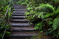 Wet stairway in tropical rainforest Royalty Free Stock Images
