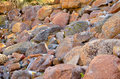 Wet stones Royalty Free Stock Photo