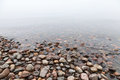 Wet stones on saimaa lake coast in foggy morning Royalty Free Stock Photography