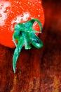 Wet tomato Stock Photography