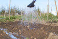 Wet watered soil of garden bed and water pouring from watering can on sunny day Royalty Free Stock Photo