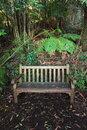 Wet wooden bench in rainforest autumn scene with an empty an australian blue mountains Royalty Free Stock Photography