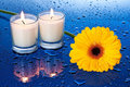 Wet, yellow flower by candle light Stock Image