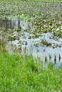 Wetland Royalty Free Stock Photo