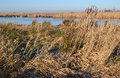 Wetland Nature Reserve The Gre...