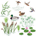 Wetland Plants and Ducks Set