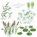 Wetland Plants Set