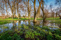Wetland in szczecin poland water from snowmelt the beginning of spring Royalty Free Stock Photo