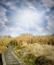 Wetland walk wooden boardwalk leading into Royalty Free Stock Photography