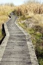 Wetland walk wooden boardwalk leading into Stock Image