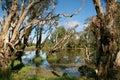Wetlands Royalty Free Stock Photo