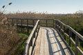 Wetlands being crossed by a wooden footbrige Royalty Free Stock Photos